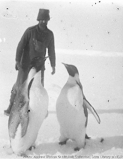 Moyes rounds up two Emperor penguins